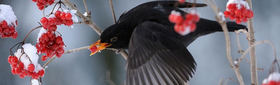Uccelli-Gabbie ed accessori